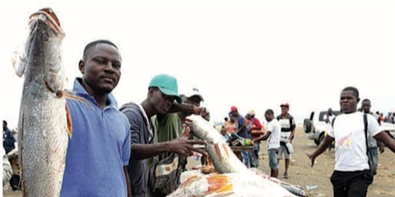 Importações de pescado caem 78,2% e exportações disparam 55,6%