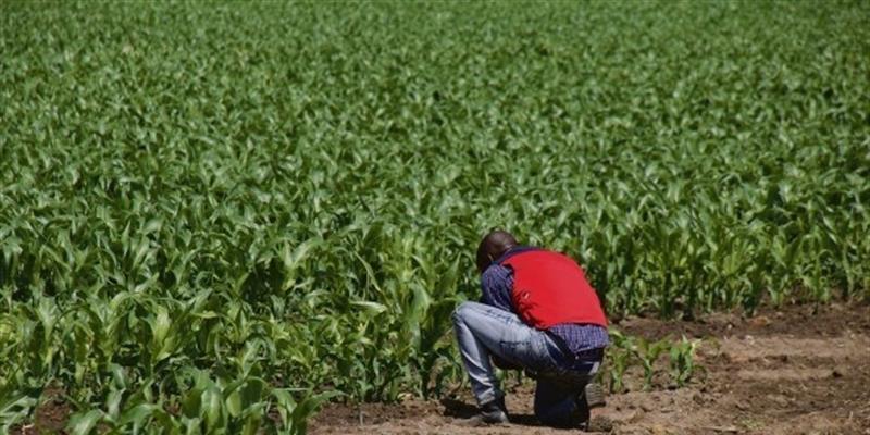 MINFIN endivida-se para capitalizar Fundo de Apoio ao Desenvolvimento Agrário