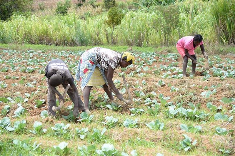 Foco: agricultura, disse JLo, mas meta da declaração de Malano continua distante