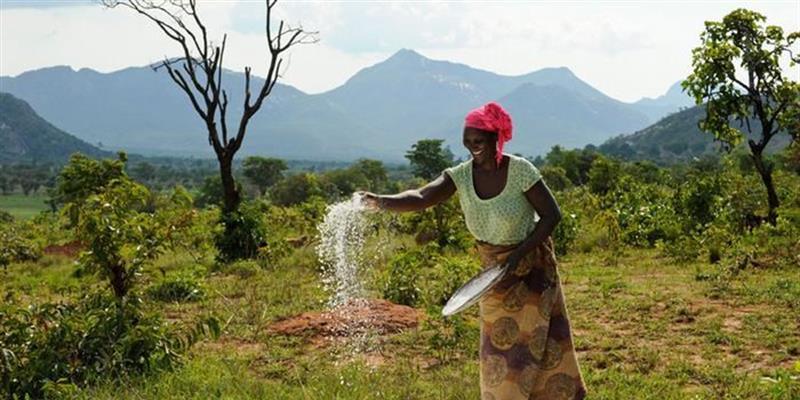 Produção agrícola cresce em todas as fileiras, mas faltam apoios financeiros e técnicos